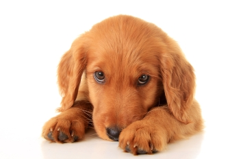 puppy diseases