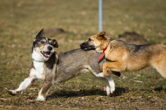 socializing dogs