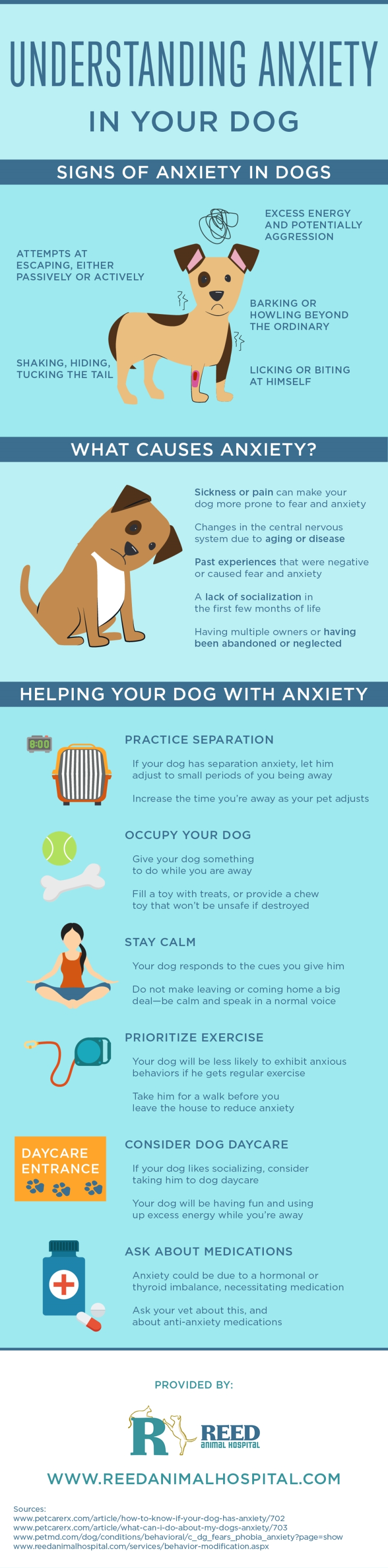 an infographic showing relevant information on dog anxiety