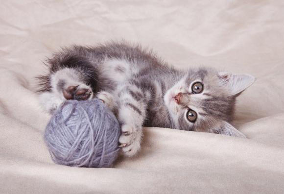 kitten wellness