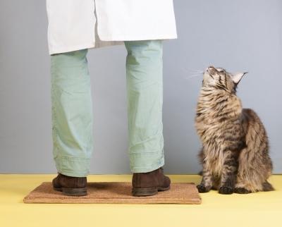 vet house call