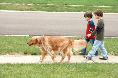 dog walking benefits