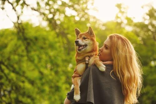 dog hormonal imbalances