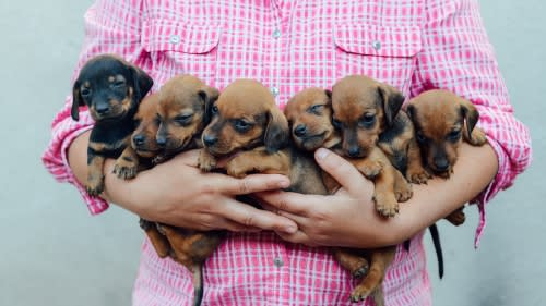 puppy milestones