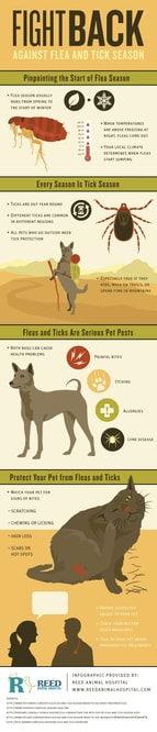flea and tick infographic