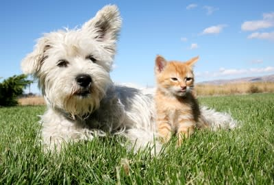 benefits of spaying and neutering