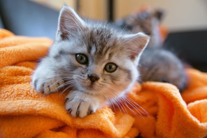 cat vet trip