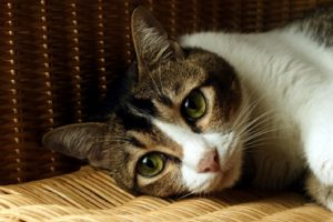 Signs of Tooth Discomfort in Your Pet