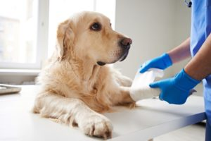 ACL injuries treatment at Reed Animal Hospital