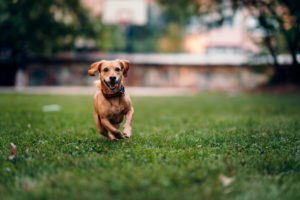 Signs of Pyoderma in Dogs
