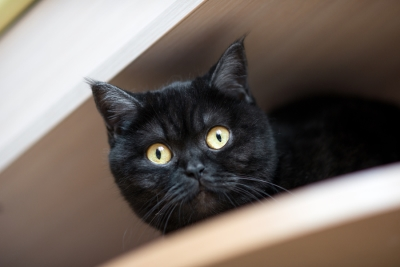 Causes of Appetite Changes in Cats explained by Reed Animal Hospital