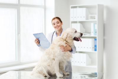 Benefits of Laser Therapy explained by Reed Animal Hospital