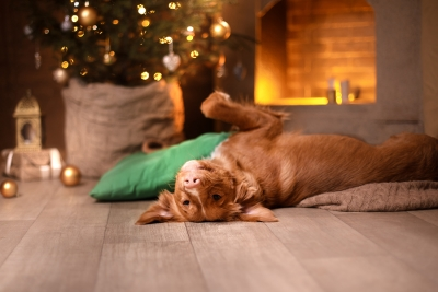Pet Safety Tips for the Holidays by Reed Animal Hospital