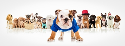 Tips for Socializing Puppies by Reed Animal Hospital