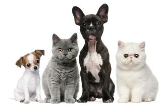 Spay & Neuter Pets at Reed Animal Hospital