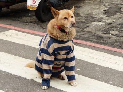 dog in winter clothes.
