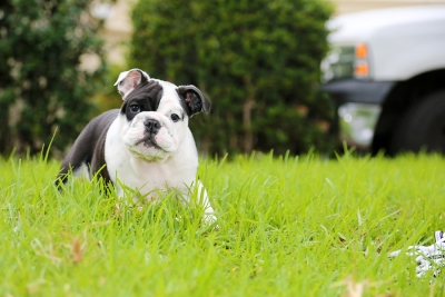 FAQs About Spay and Neuter Services in Saratoga or Campbell